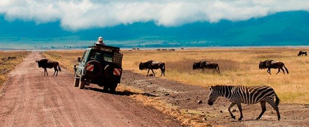 Организация сафари туров по национальным паркам Танзании после Килиманджаро